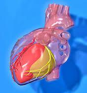 cardiopatia1