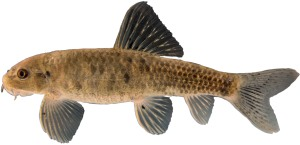 peces4