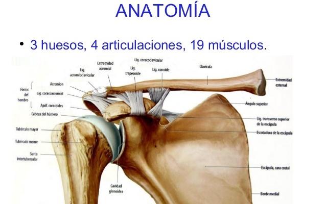 Qué es una dislocación del hombro? – Centro Clínico y dental Miracle ...
